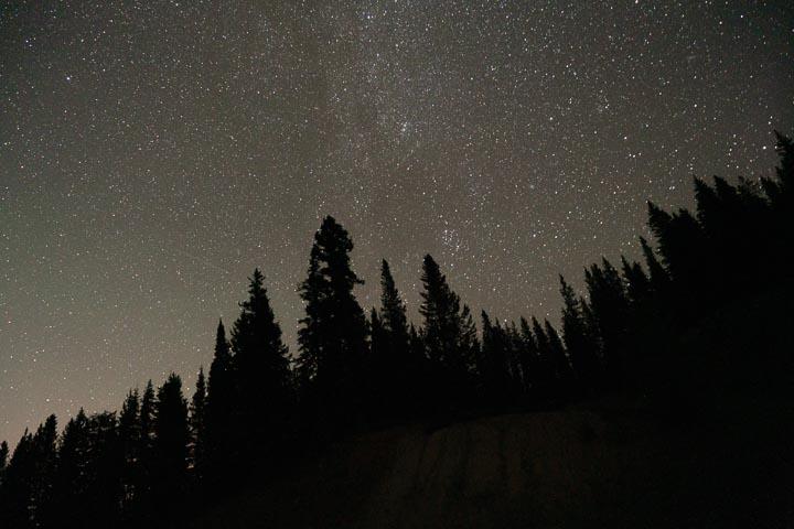 Silhouette of pine trees beneath a dark starry sky